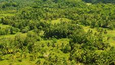 菲律宾薄荷岛热带雨林唯美照片椰林图片