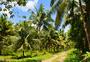 菲律宾薄荷岛热带雨林图片