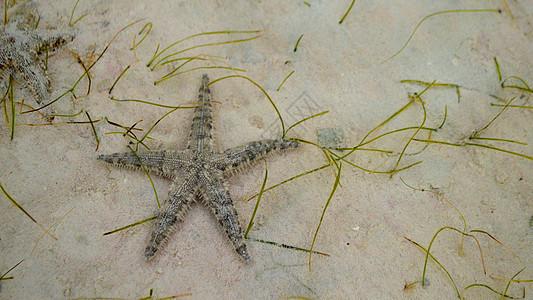 菲律宾米沙鄢海域海星图片