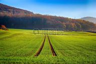 绿色田园景观图片