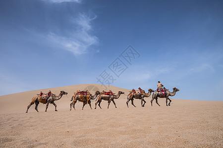 敦煌沙漠骆驼图片