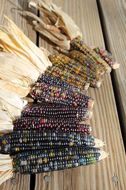 黑玉米图片