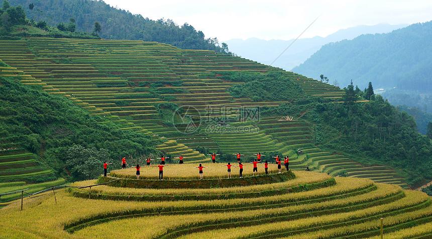 越南稻田图片