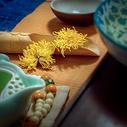金丝黄菊图片