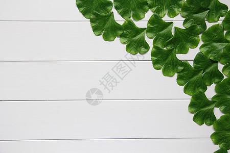 银杏树叶静物素材图片