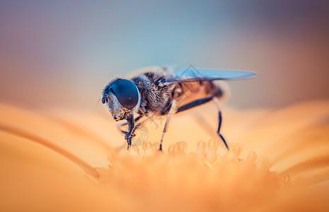 勤劳的蜜蜂图片