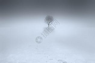 大雪中的一棵树图片