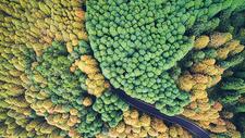 航拍森林道路图片