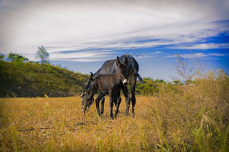 草原上的马图片