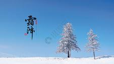 霜降500655768图片