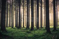 森林的阳光图片