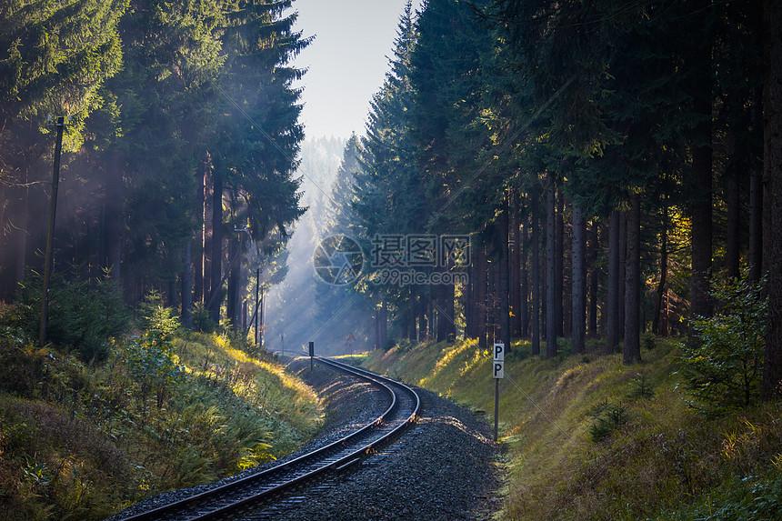 穿越森林的铁路图片