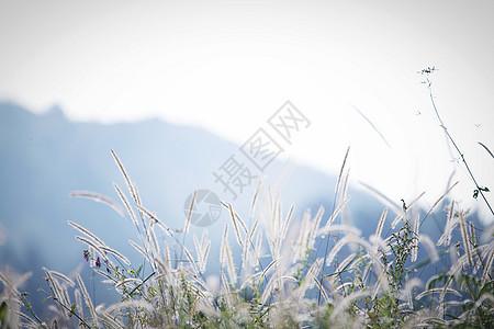 花草树叶图片