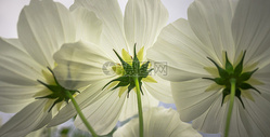 阳光下的花香500656381图片