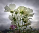 阳光下的花香500656382图片