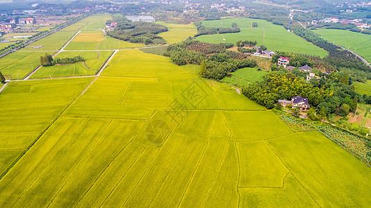航拍丰收的稻田图片