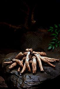 云南野生菌火把菌油鸡枞图片