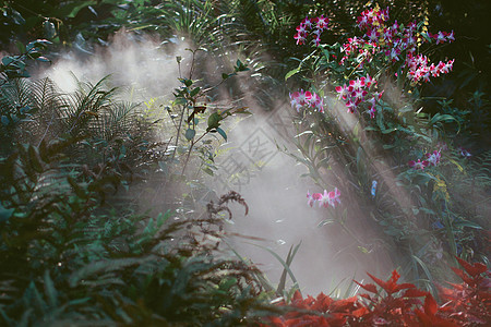 厦门万石植物园雨林景区花丛中的光与影图片