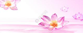 荷花粉色唯美背景图片