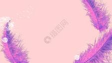 羽毛蒲公英粉色背景图片