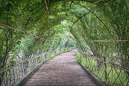 绿色长廊图片