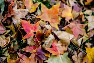 秋日落叶图片