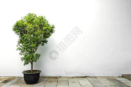 简约植物纯色背景图片
