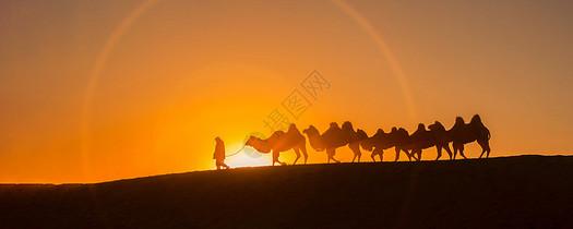 日出骆驼图片