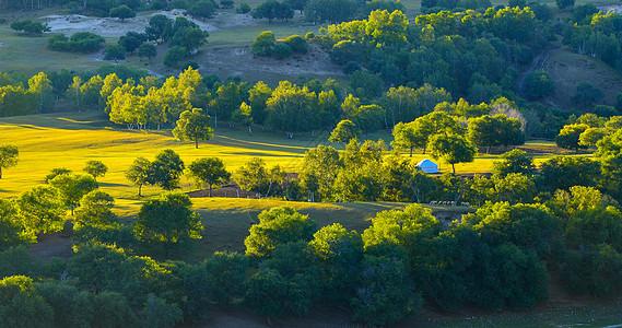 树林草地上光影图片
