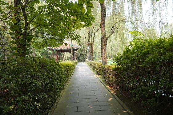 公园笔直小路风景图片