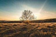 秋天的田园景色图片