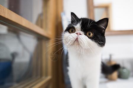 家居猫图片