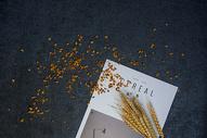 秋天的桂花静物图片