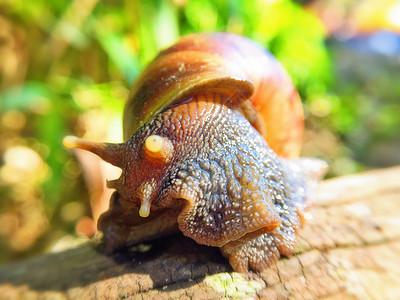 海南三亚森林中的动物们图片