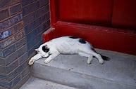 慵懒的猫咪图片