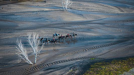 内蒙古坝上的马队图片