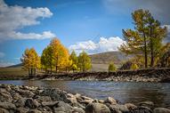 秋天金黄灿烂的树林 图片