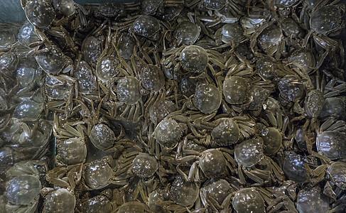 好多螃蟹图片