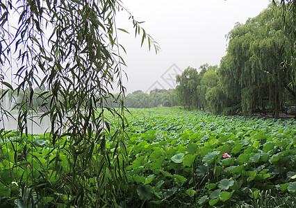 北京圆明园内风景图片