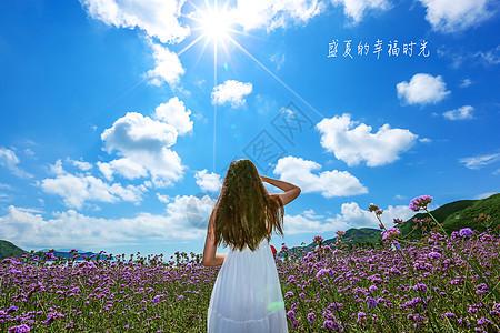 桃花岛薰衣草花海阳光下的美女图片