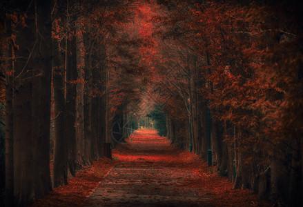 秋天上海宝山滨江森林公园图片
