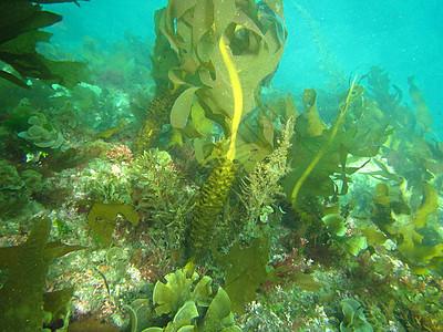 韩国济州岛深潜海底世界海草图片