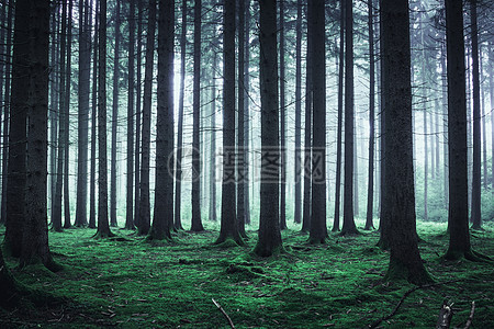 森林的树木高清图片