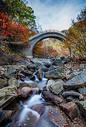 森林公园的秋天灿烂的红叶图片