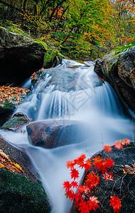森林公园里的山谷溪水图片