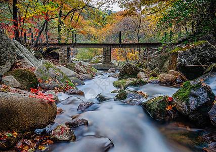 森林公园中红叶溪水山谷  图片