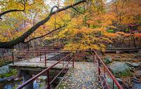 森林公园里铺满秋天落叶的小路图片