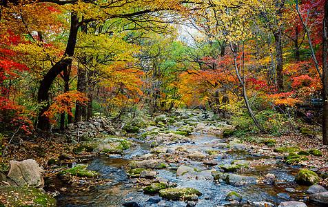 森林公园美丽的秋色图片