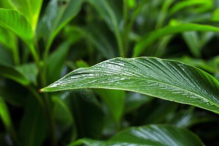 雨中的树叶图片