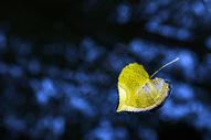 深秋小河中的落叶图片